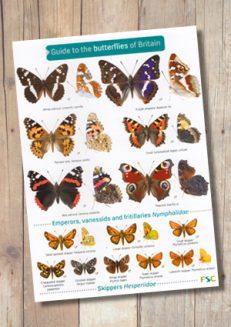 OP48b-ButterfliesBritain