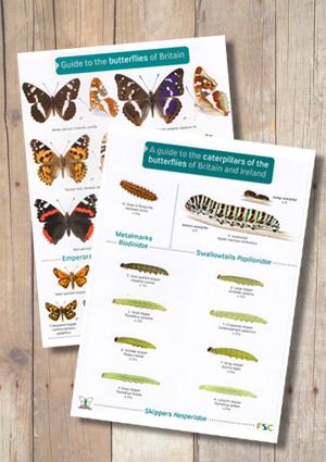 OP48b-and-OP70b-Butterflies-and-Caterpillars