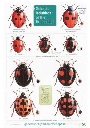 OP102-Ladybirds