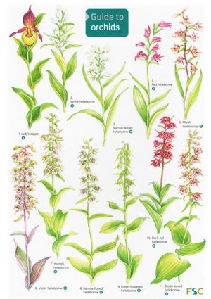 OP21-Orchids