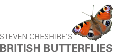 Steven Cheshire's British Butterflies